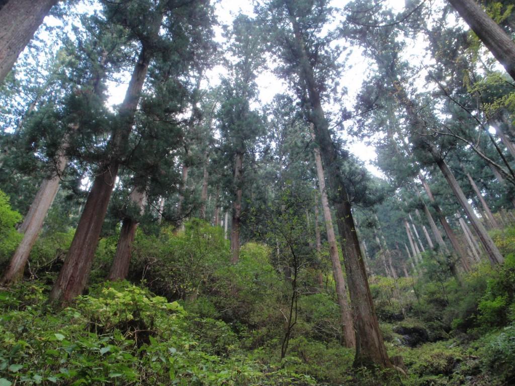 吉野の美しい山